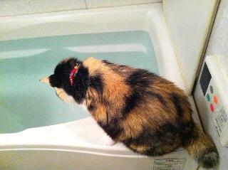 しっぽ浴もしたいのですが・・・