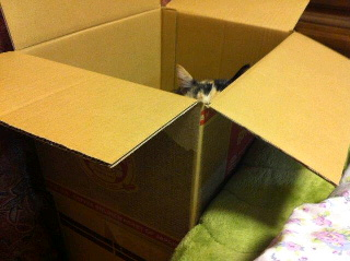 箱ひとり占め