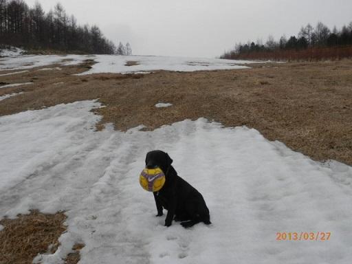まめと雪遊び
