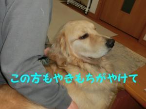 CIMG0333_convert_20130210221817.jpg