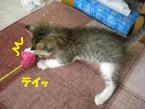 ②おもちゃキジ白