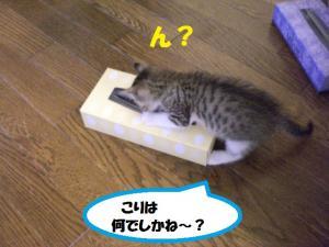 ティッシュき1