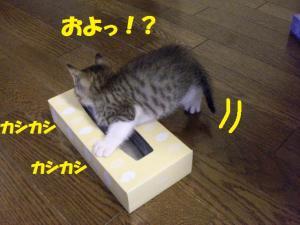 ティッシュき2
