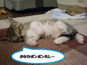 ①寝る3ポンポン