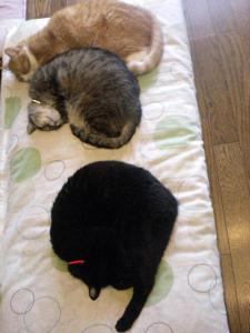 ②猫団子3