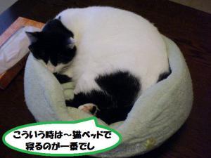 ③モチ猫ベッド