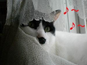 ①カーテン1