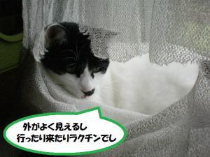 ①カーテン3
