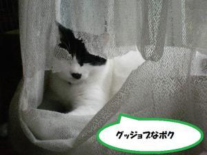 ①カーテン4
