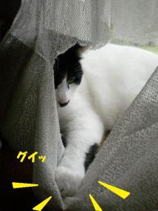 ①カーテン5