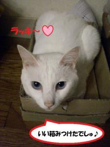 ①箱プリン1
