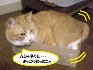 ①箱ココ1