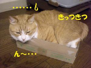 ①箱ココ2