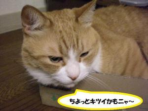 ①箱ココ3