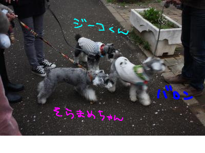 snap_baron20101214_201341233041.jpg
