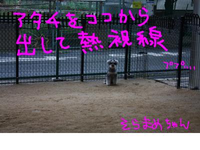 snap_baron20101214_201341233727.jpg