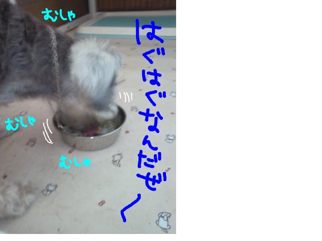snap_baron20101214_20135011461.jpg