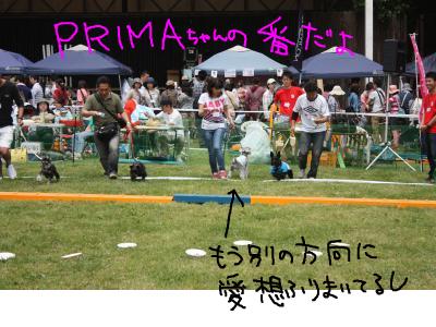 snap_baron20101214_20135214820.jpg