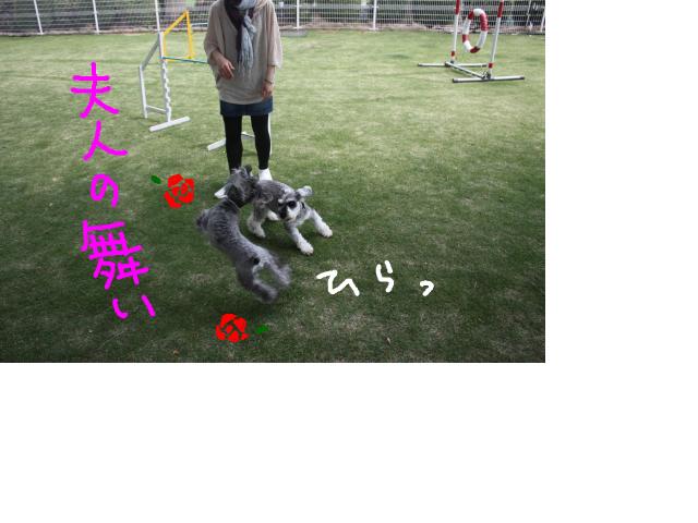 snap_baron20101214_201353214046.jpg