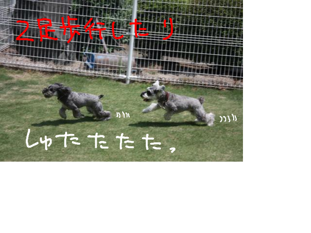 snap_baron20101214_201353214325.jpg