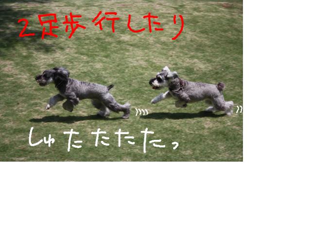 snap_baron20101214_201353214456.jpg