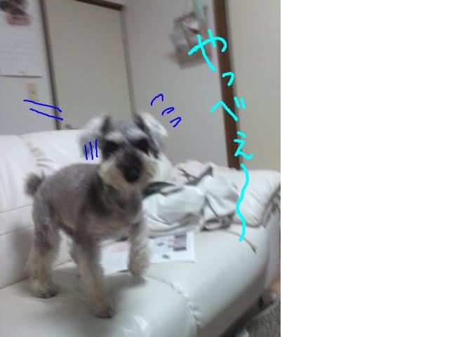 snap_baron20101214_201355182129.jpg