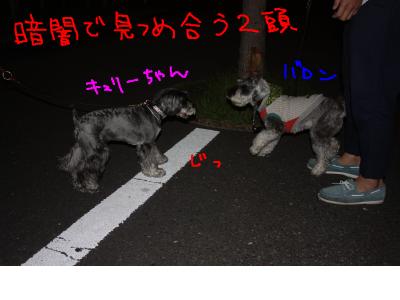 snap_baron20101214_201365105625.jpg