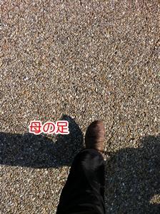 b1039.jpg