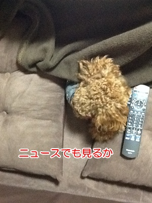 b937_20121226213058.jpg