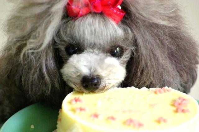 リリィ2歳Birthday 092