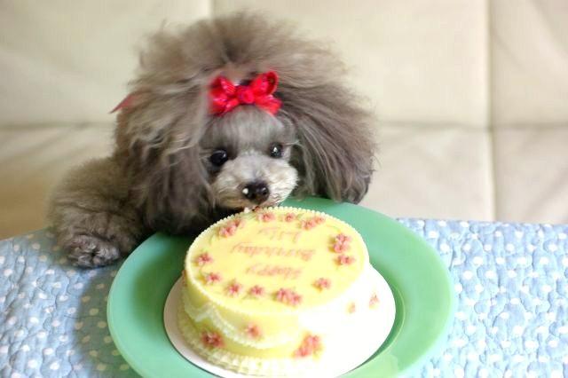 リリィ2歳Birthday 067
