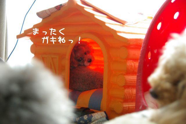 九十九里ドッグラン 042