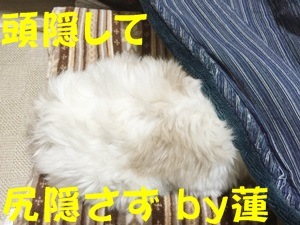 IMG_4812-b.jpg