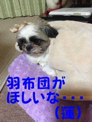 IMG_4873-b.jpg