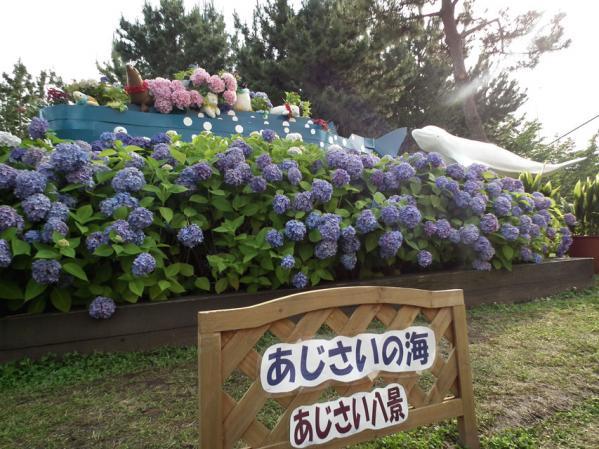 2012年 八景島あじさい祭りの紫陽花(5)