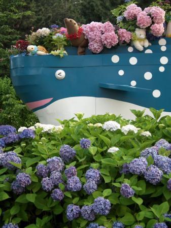 2012年 八景島あじさい祭りの紫陽花(6)