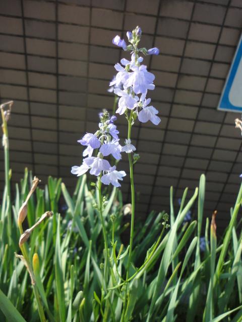 出先で見つけた花①