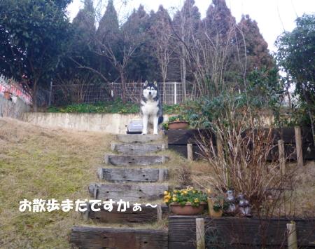 20140126_1.jpg