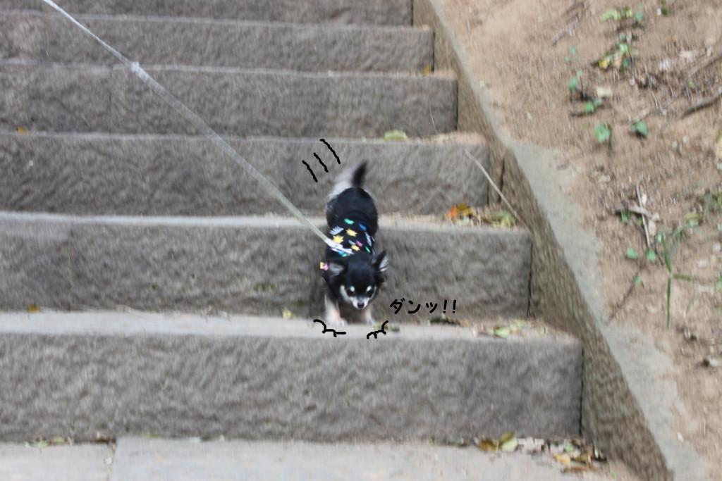 迫力の階段降り!