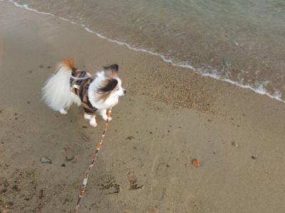 海岸散歩1