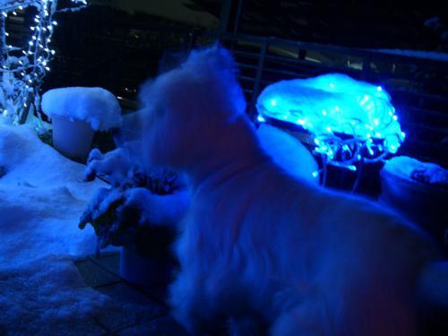 illuminationyorimoheater4.jpg