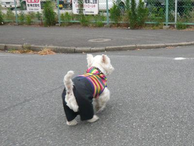 kusaboubougasukika1.jpg