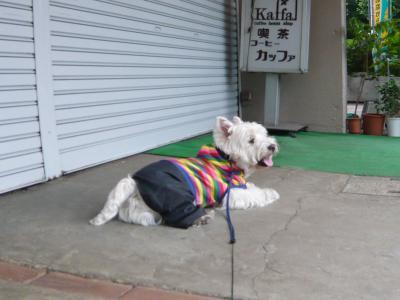 kusaboubougasukika4.jpg