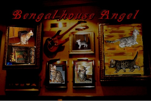 Bengal house Angel Welcome