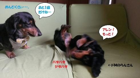 2013052602.jpg