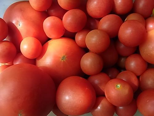 トマト沢山