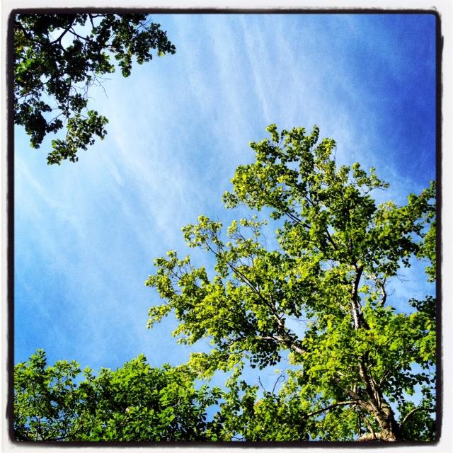 skyandtree.jpg
