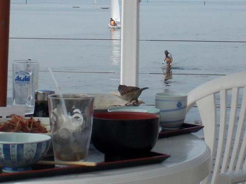 009佐島海辺のスズメ