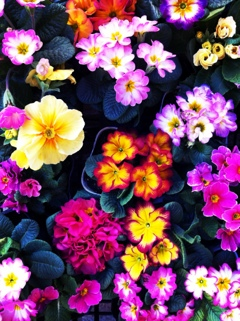 fc2blog_20130203123835129.jpg