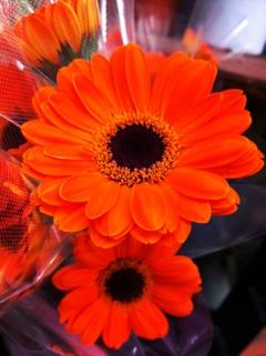 fc2blog_20130215190926ed6.jpg